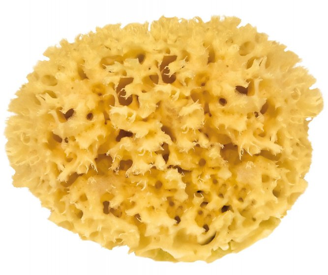 Croll & Denecke Natural Mediterranean Sponge
